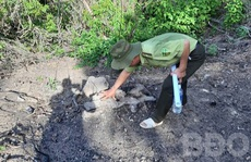 Bình Định: Tái diễn nạn phá rừng, chủ tịch tỉnh yêu cầu công an điều tra