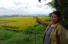 Quảng Bình: Cần làm rõ việc côn đồ lộng hành tại các miền quê, 'bảo kê' cánh đồng?
