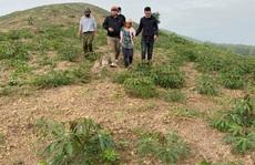 CLIP: Công an vây bắt người phụ nữ bị truy nã giữa đồi vắng