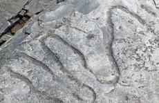'Bóng ma' 560 triệu tuổi dưới đáy biển là… tổ tiên chúng ta