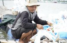 Cá chết bất thường ở sông Chà Và, người nuôi ôm nợ