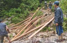 'Lâm tặc' ngang nhiên phá rừng phòng hộ, vận chuyển gỗ giữa ban ngày