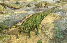 Hãi hùng 'quái thú' 193 triệu tuổi da đầy gai, xương đầy đinh tán