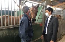 Pháp lo sợ trước hàng loạt vụ cắt tai, móc mắt, rút máu ngựa