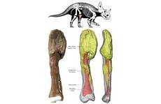 Khủng long cũng bị ung thư ác tính với khối u 76 triệu năm tuổi