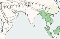 Bí ẩn loài họ hàng con người khai phá Đông Nam Á tận 13 triệu năm trước