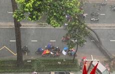 TP HCM: Người bị cây xanh bật gốc đè ngã đã tử vong