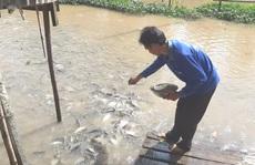 Mặn duyên với đàn cá tự nhiên