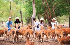 Du lịch Nha Trang mở cửa lại