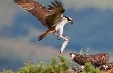 Quấy rầy chim quý ở xứ Wales, chương trình truyền hình bị điều tra