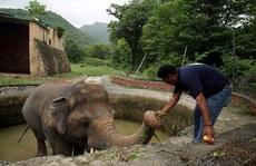 """Con voi 'cô đơn nhất thế giới"""" được giải cứu"""