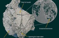 Sinh vật bọc thép tiết lộ bí ẩn 'thủy quái' không xương thời hiện đại