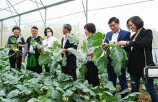 Nông dân Vân Hồ tăng gấp đôi thu nhập nhờ trồng rau sạch