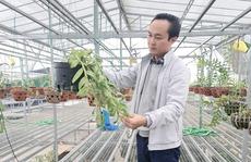 Nghệ nhân Minh Xa chia sẻ bí quyết chăm sóc hoa lan