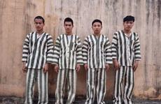 Cưa hạ 50 mét khối gỗ cổ thụ, 4 đối tượng đón Tết trong tù