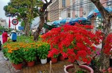 Cần Thơ bàn giải pháp hỗ trợ người bán hoa kiểng