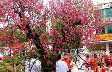 Bài dự thi 'Làm báo cùng Báo Người Lao Động': Tết hoa