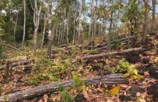 Phá nát rừng cộng đồng