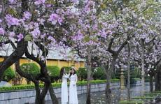 Tản mạn: Hoa Xuân