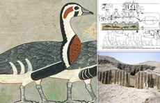 'Mona Lisa trong mộ cổ Ai Cập': sinh vật đã biến mất khỏi Trái Đất
