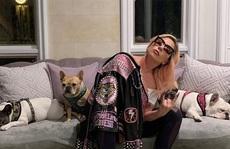 """Chó cưng an toàn sau khi Lady Gaga treo thưởng """"khủng"""""""