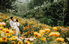 Cảnh sắc thần tiên ở rừng hoa bất tử tại Đà Lạt