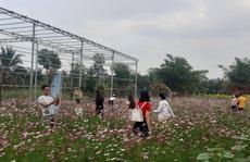 CLIP: Kỹ sư trở về từ Israel thiết kế ruộng hoa 'hút hồn' giới trẻ miền Tây