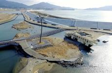 Thảm hoạ Nhật Bản: 'Cây thông thần kỳ' 10 năm trước bây giờ ra sao?