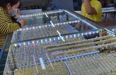 Giá vàng hôm nay 13-3: Vàng SJC tăng giá mạnh