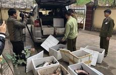 Cá tầm Trung Quốc nhập lậu tràn lan, Tổng cục Quản lý thị trường chỉ đạo khẩn