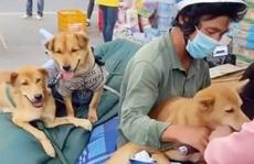 Vụ 15 con chó bị tiêu hủy vì chủ mắc Covid-19: Chuyên gia nói gì?