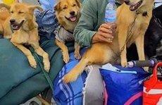 Diễn biến bất ngờ vụ đàn chó, mèo bị tiêu hủy ở Cà Mau
