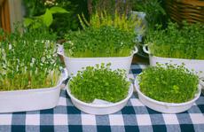 Tự trồng rau mầm với các dụng cụ có sẵn tại nhà