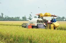Nông nghiệp: Trụ đỡ vững chắc của nền kinh tế