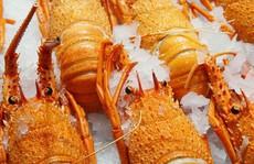 Quá phụ thuộc thị trường Trung Quốc, 11.000 tấn tôm hùm Úc 'bơ vơ'