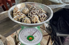Xử phạt nhà hàng bị tố 'chặt chém' 1,8 triệu đồng/kg ốc hương