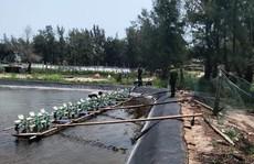 Điều tra vụ hơn 100 vạn tôm giống chết trắng sau một đêm, nghi bị đầu độc