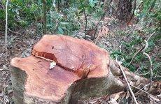 Để rừng bị triệt hạ như chốn không người, giám đốc tự nhận hình thức kỷ luật gì?