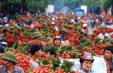 Đề nghị Thủ tướng gỡ khó cho hàng trăm ngàn tấn nông sản, hàng chục triệu gia súc gia cầm