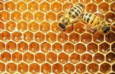 Mật ong bị Mỹ điều tra chống bán phá giá