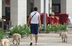 Nỗi khổ sống gần nhà nuôi chó