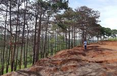 Cưa hạ hơn 6.700 cây thông chết ven đường