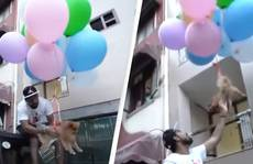 YouTuber nổi tiếng bị bắt sau khi buộc chó cưng vào bóng bay