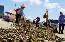 Bãi biển Vũng Tàu lại bị rác 'tấn công'