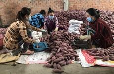 Chăm lo 'trụ đỡ' nông nghiệp