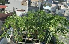 Vườn sân thượng hàng trăm cây ăn quả