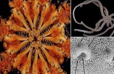 Phát hiện loài 'quái vật' kỷ Jura 8 hàm răng, còn sống đến ngày nay