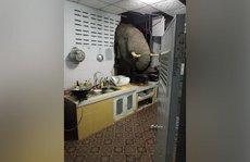 Thái Lan: Đang ngủ, tá hoả vì voi xông vào bếp