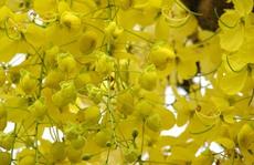 Những mùa hoa đẹp đến nao lòng