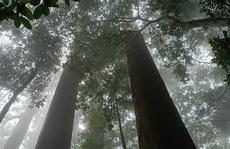 Thăm rừng 'đặc sản' ở xứ Thanh